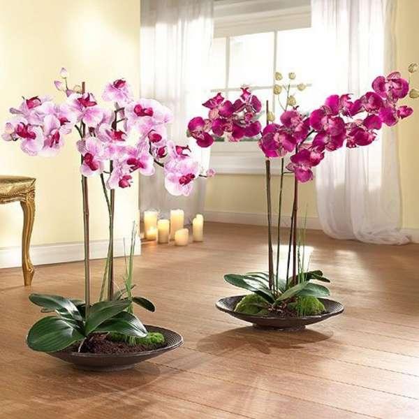 Комнатные растения в интерьере квартиры — 65 фото в стильном оформлении