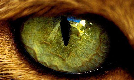 Как видят кошки? Интересные факты о зрении МУРлык
