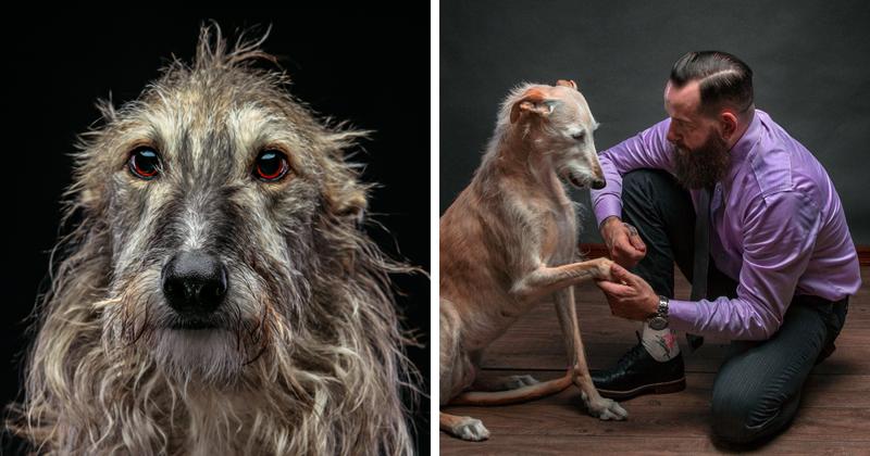 Судьба собак, брошенных после сезона охоты
