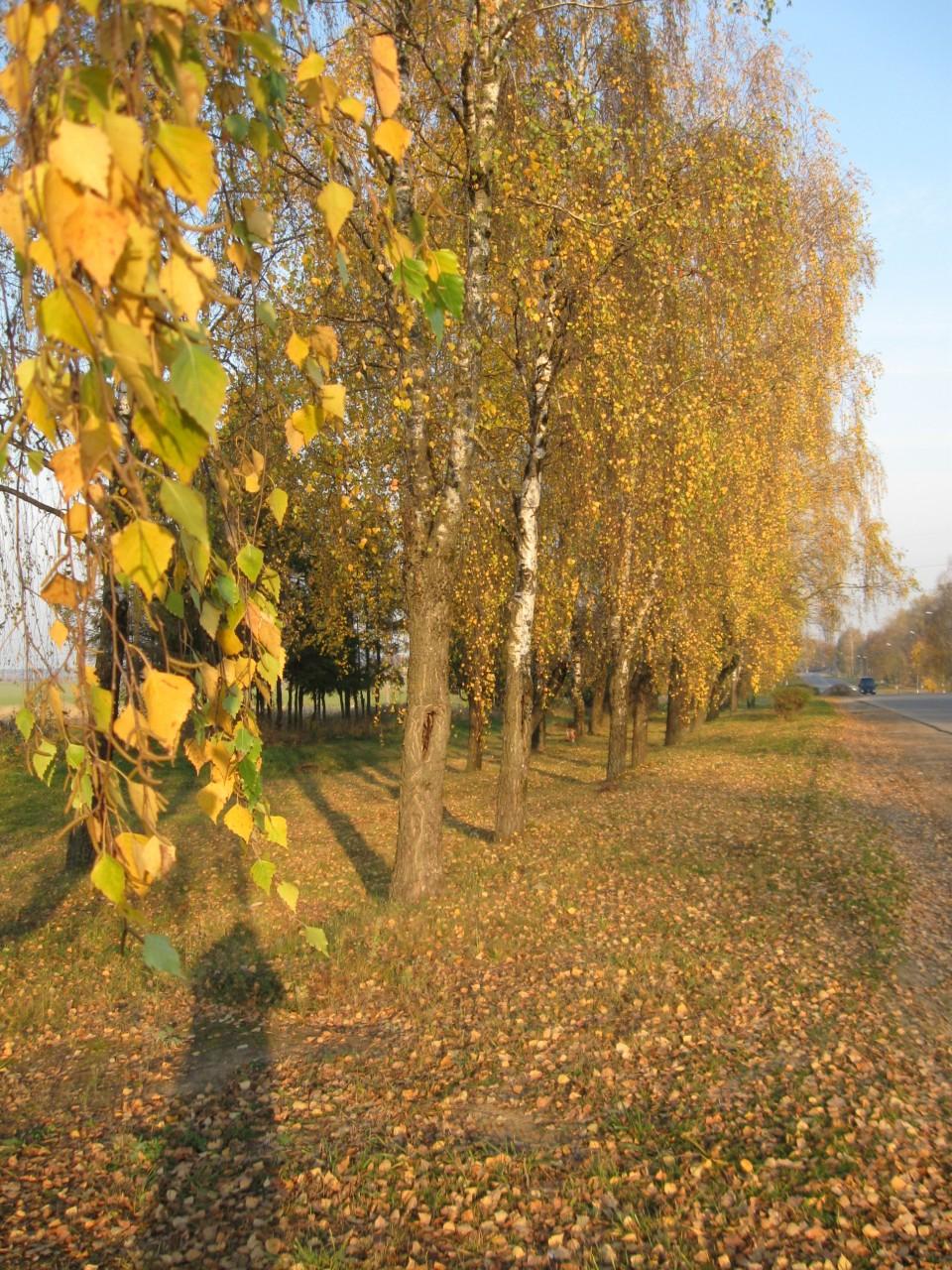 Сказка: Новогодние приключения желтого листочка