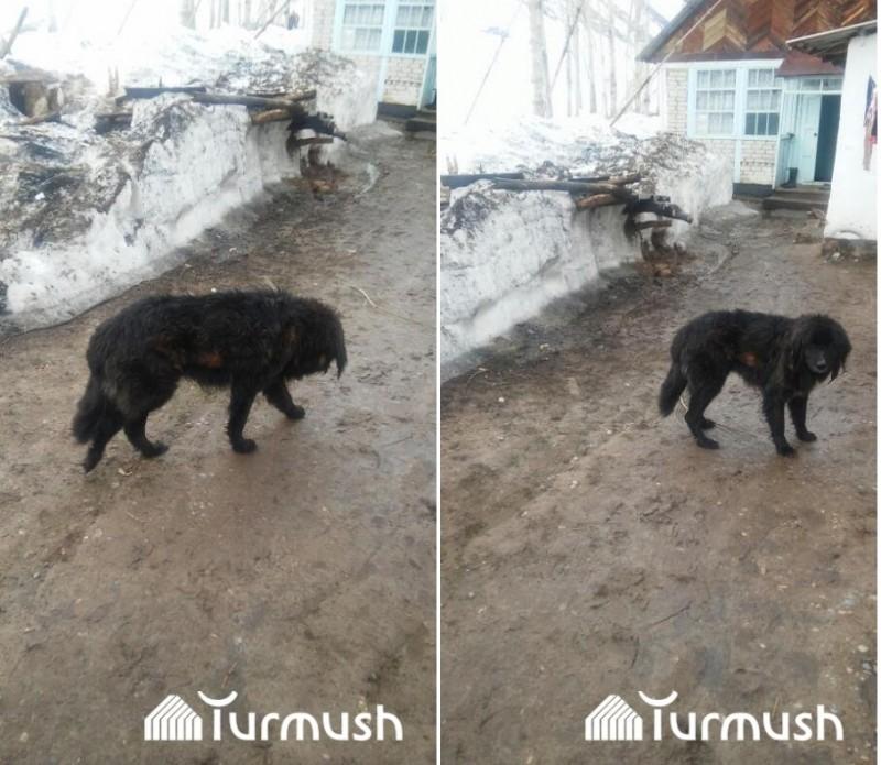В Киргизии собака выжила после 44 дней под снежной лавиной