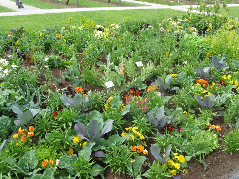 Фото цветы на грядке в саду