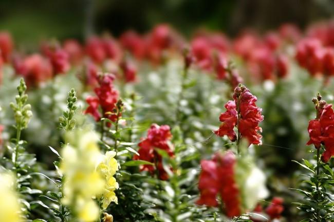 Этот роскошный цветок является очень лакомым для всевозможных вредителей. Следует вовремя обезопасить растения в саду