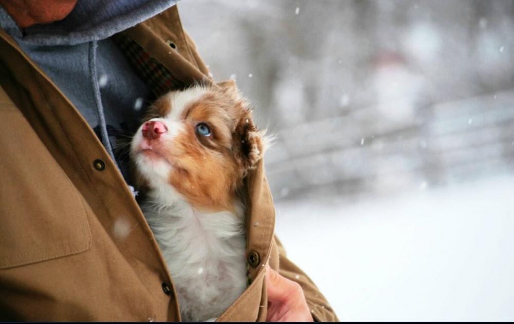Сибиряк удивил жителей Нью-Йорка, бросившись спасать собак в ледяную воду
