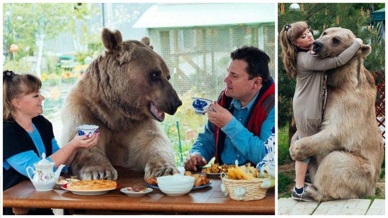 Он похож на большую плюшевую игрушку! 300-килограммовый медведь в качестве домашнего питомца