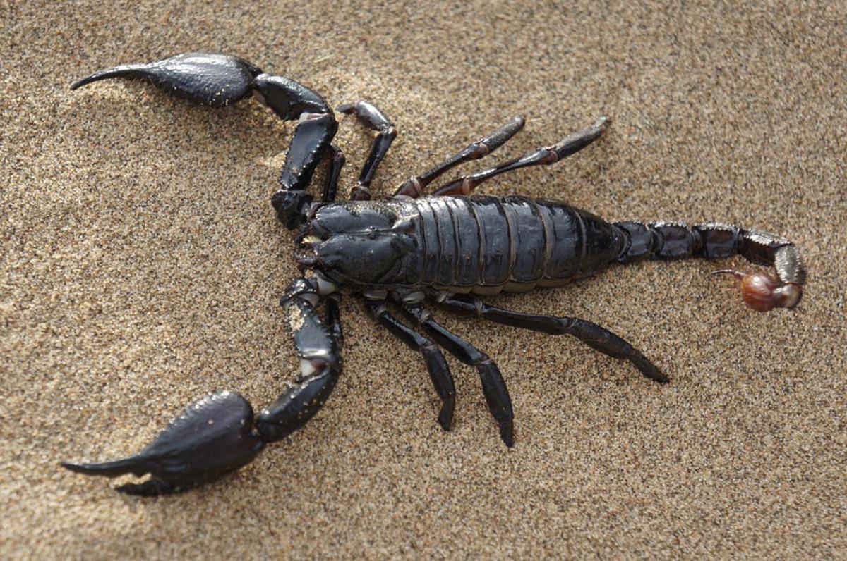 Яд скорпиона применят для доставки лекарств в мозг