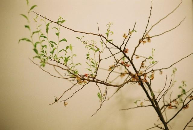 Вытягивание побегов и измельчение листьев на комнатных растениях