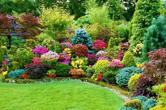 Эти кустарники просто обязаны быть на вашей даче