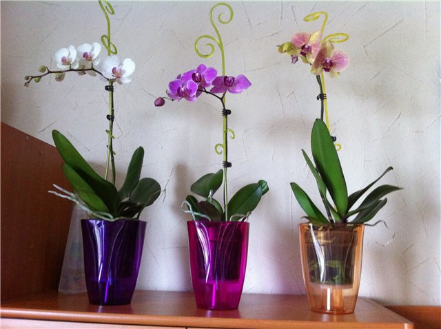 Какое кашпо для орхидей выбрать?