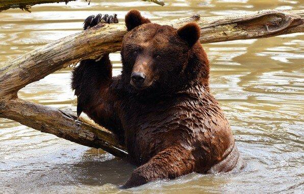 Медведица ревела и металась, пытаясь забраться на крутой обрывистый берег, на котором скулил медвежонок. Люди решились помочь.