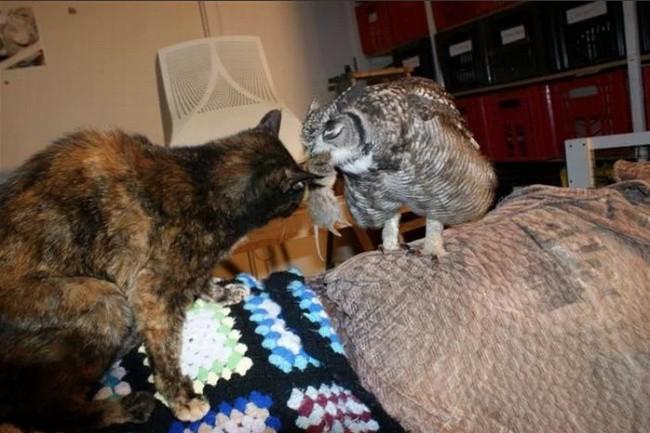 Парень подобрал раненую сову, и вот как она его отблагодарила благодарность, животные, жизнь, сова, факты