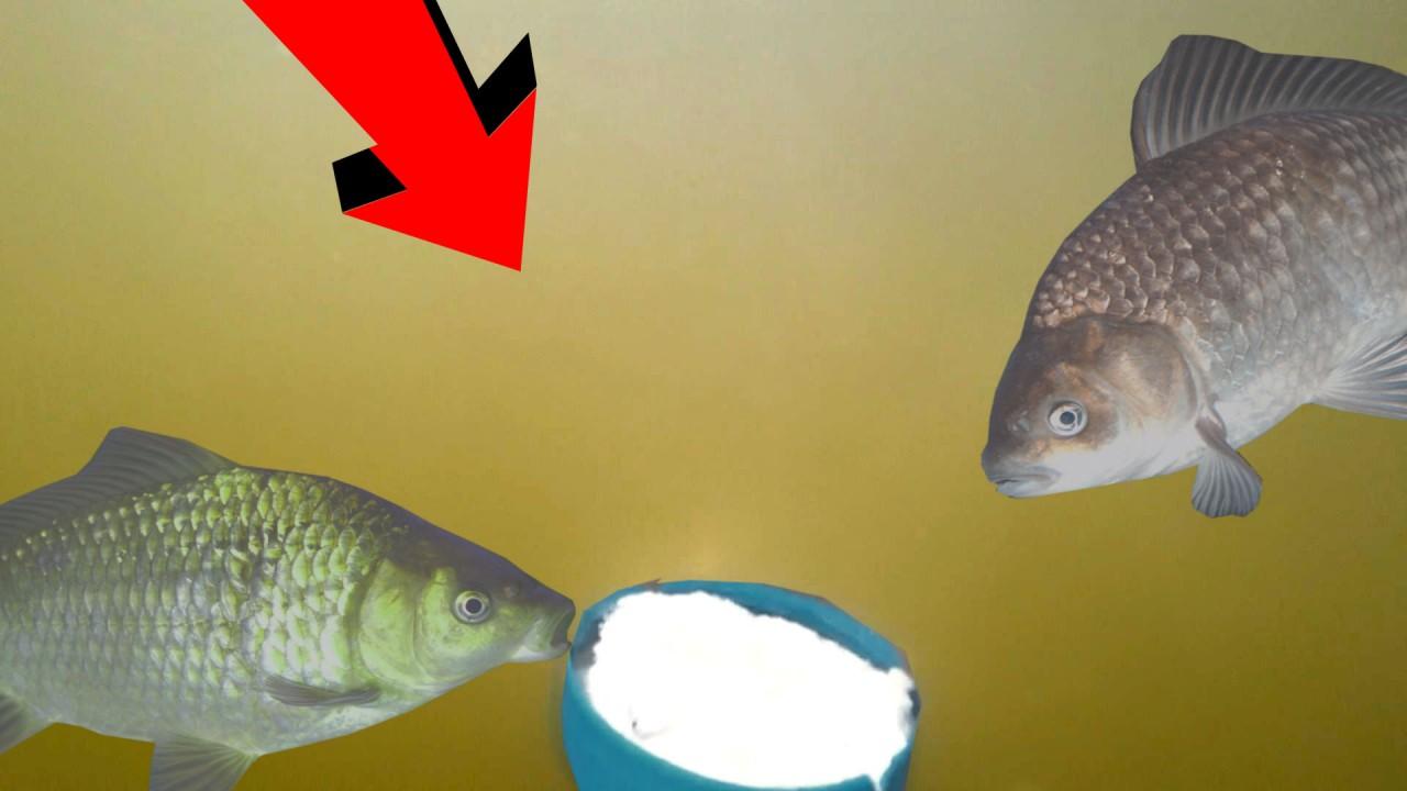 Манная БОЛТУШКА в действии! Реакция рыбы на болтушку! Подводная съемка