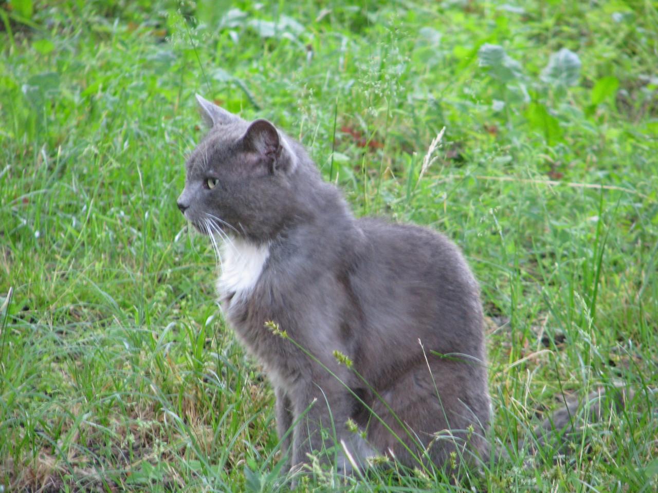 Братья наши меньшие: как и какие болезни исцеляет кошка?