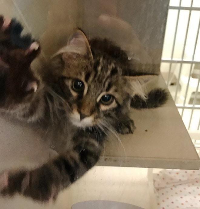 «Давайте обниматься»: милый котик влюбил в себя будущих хозяев, просто обняв их