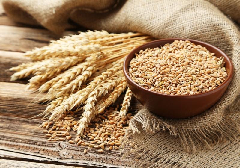 вред от пшеницы