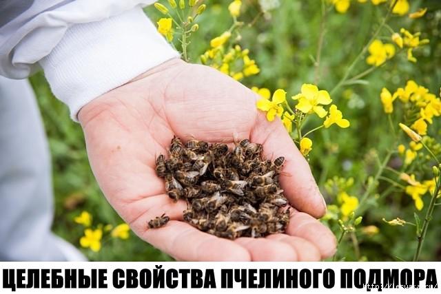 3925073_image_1_ (640x427, 159Kb)