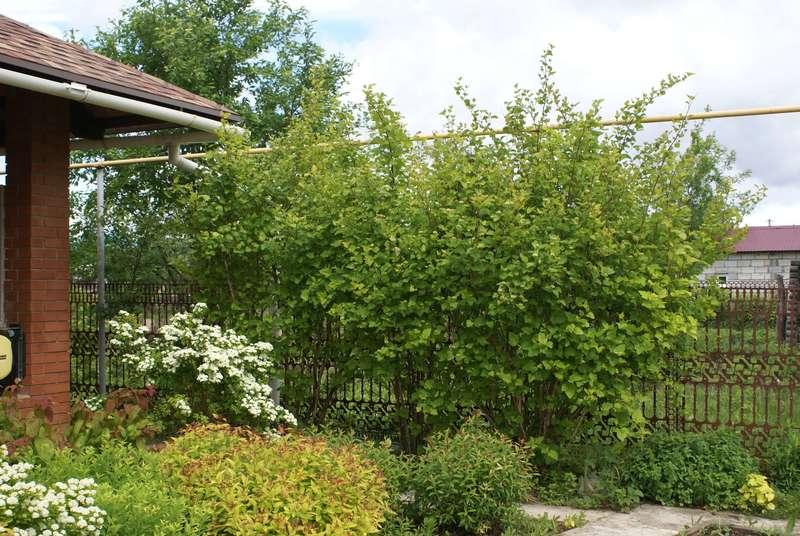Как скрыть некрасивый забор: 7 растений, которые превосходно справятся с этой задачей
