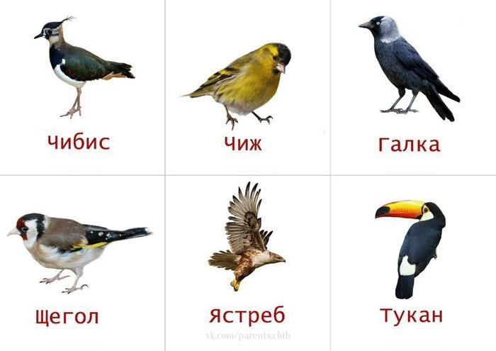 Для детей, как научное, познавательное пособие, картинки с птицами и их названия