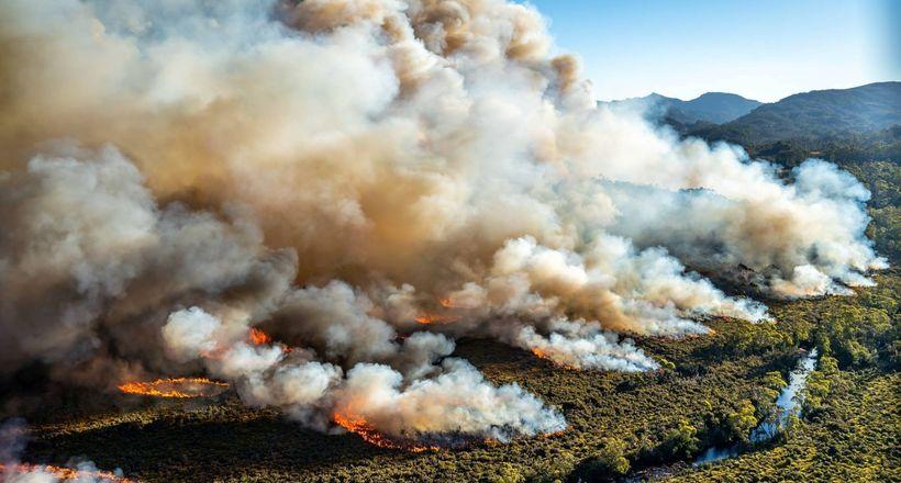 ПоразиÑ'ÐµÐ»ÑŒÐ½Ð°Ñ Ñ…Ð¸Ñ'роÑÑ'ÑŒ: почему ехидны не гибнут во Ð²Ñ€ÐµÐ¼Ñ Ð»ÐµÑных пожаров в ÐвÑтралии