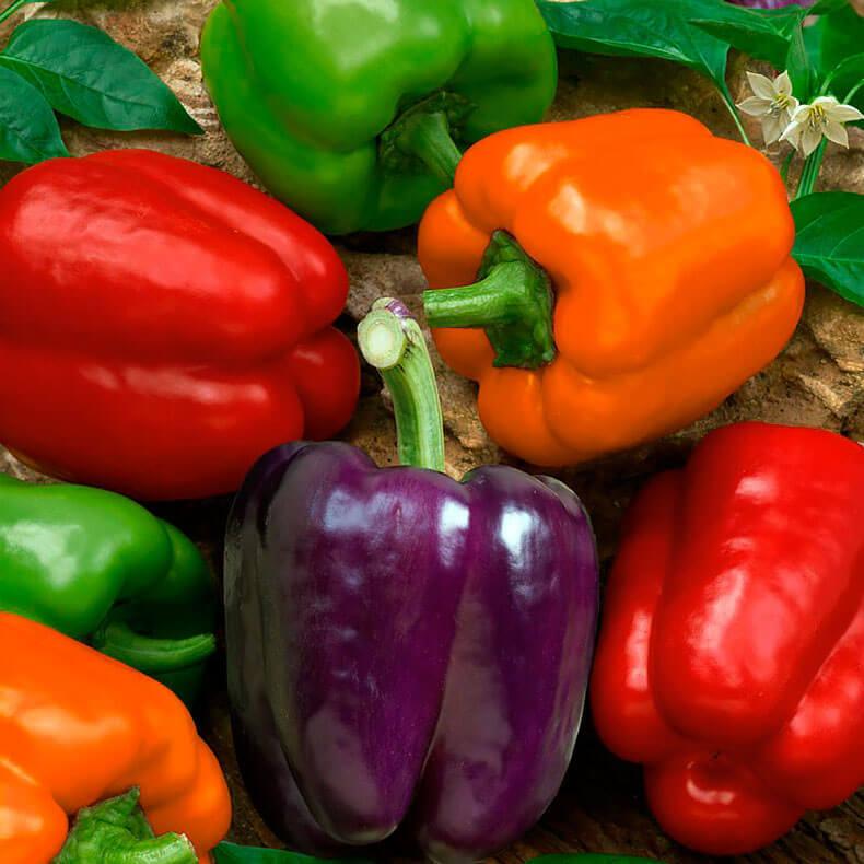 Как правильно формировать болгарский перец
