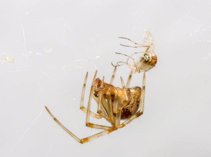 Почему ученые не советуют убивать пауков