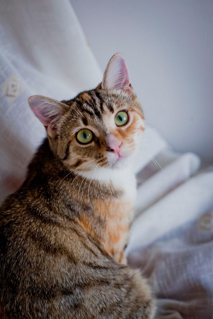 Кошка с сюрпризами! (Продолж…