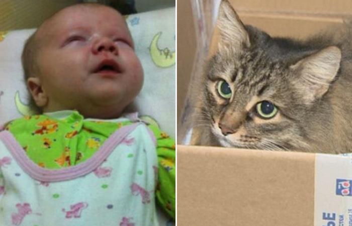 Бездомная кошка нашла ребенка, брошенного матерью у мусоропровода
