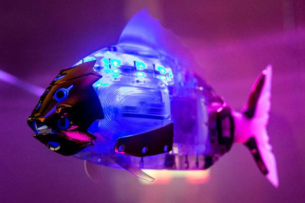 Первый в России аквариум с рыбами-роботами появился в Москве