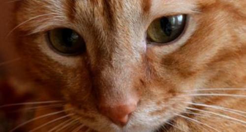 Невероятно трогательная история о коте и его верности…До глубины души!