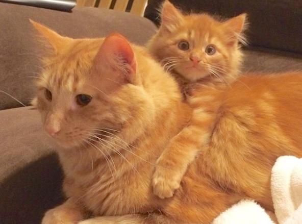 Удивительная история дружбы двух рыжих котов!