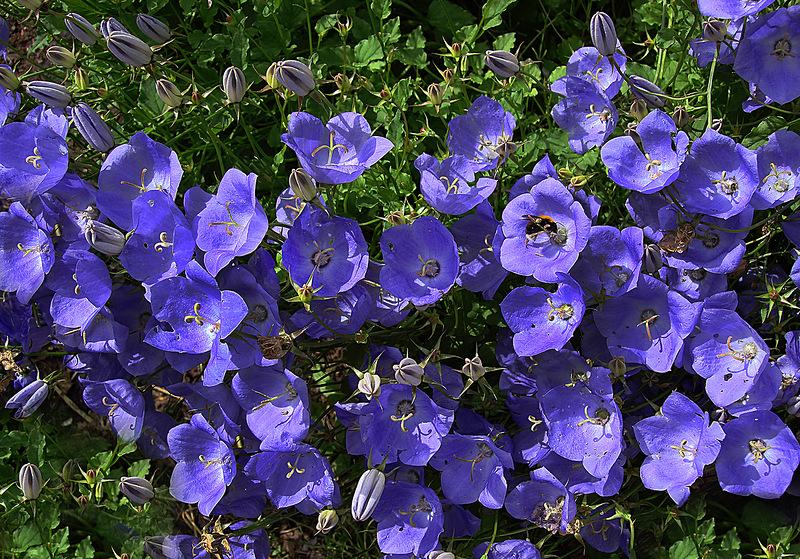 Чудесное время - это дачное цветение!