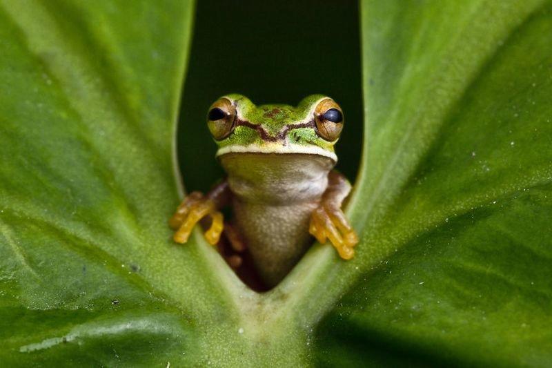 Древесная лягушка в Колумбии животные, искусство, планета земля, природа, фото, хрупкость
