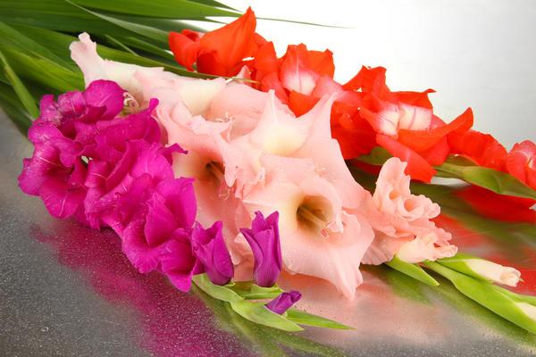 Фото цветы гладиолусы букеты