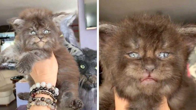 Подмосковные «котята-оборотни» могут стать новым трендом