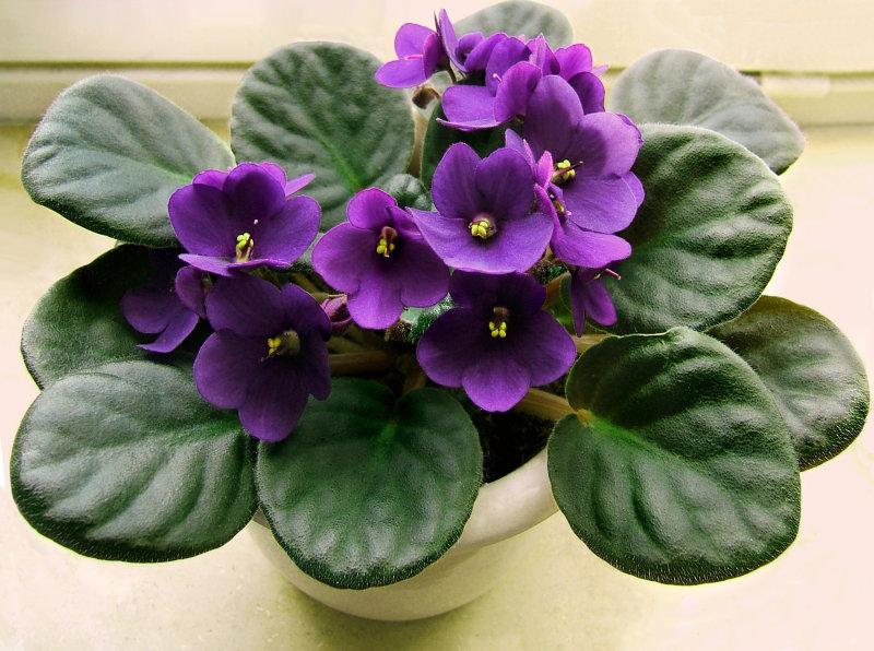 Цветы, которые приносят в дом счастье. А у вас есть такие?