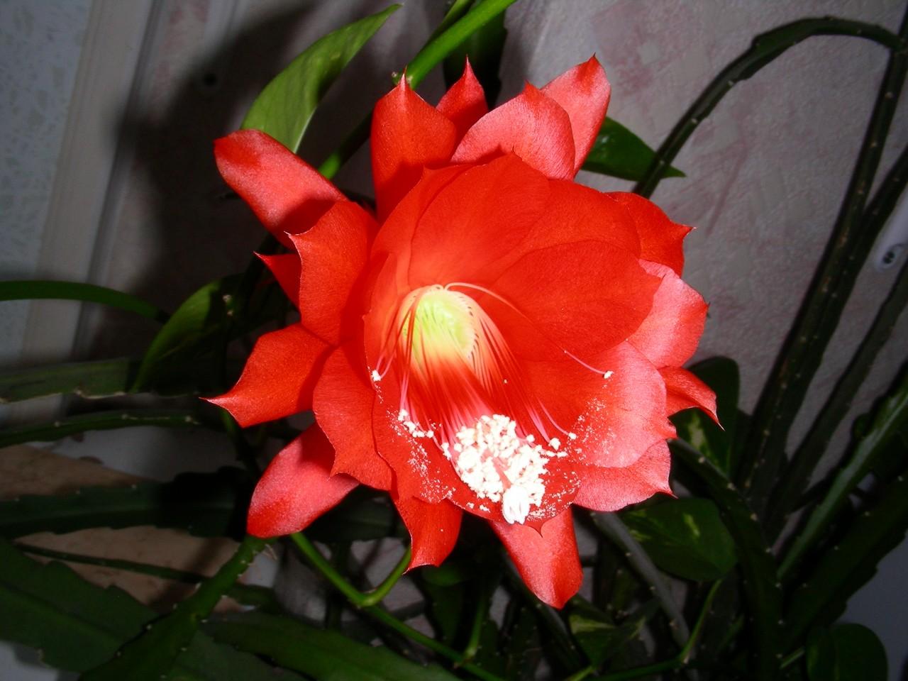 Цветок на окне.
