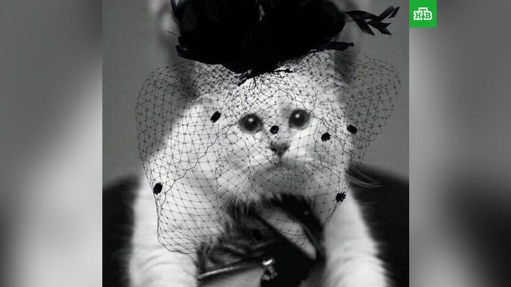 Кошка и наследница Лагерфельда выступила с заявлением
