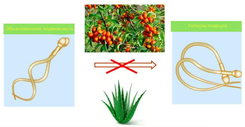 Учёные представили миру гондон из капусты и одуванчиков