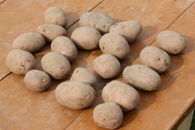 Выращиваем картошку: новый подход