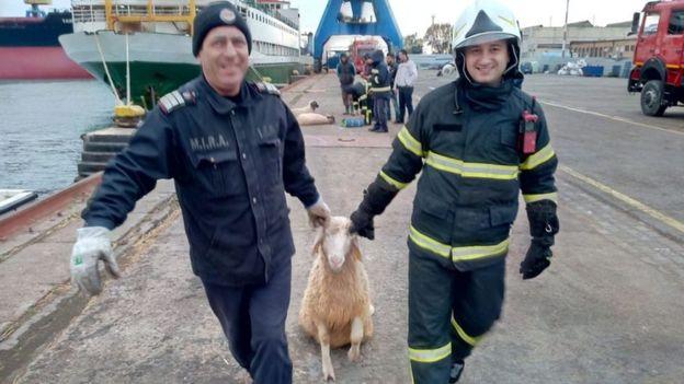 В Черном море перевернулось судно, перевозившее 14 тысяч овец