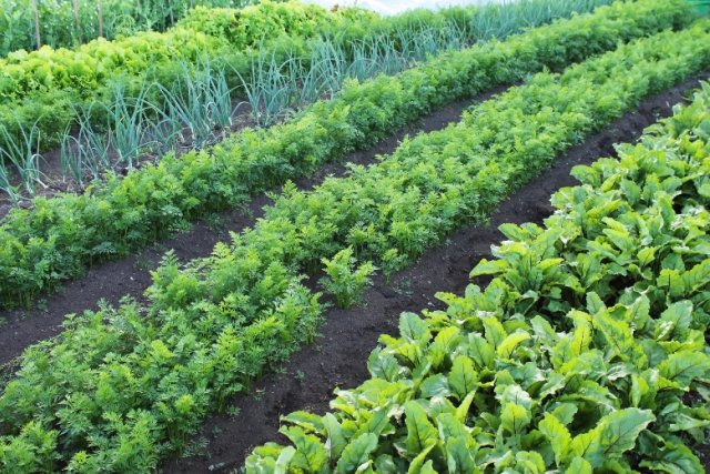 прореживание овощей