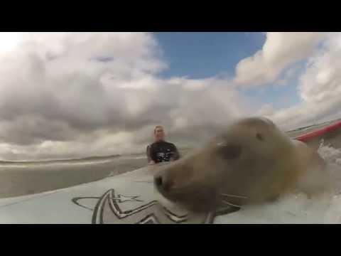 Морской котик и двое мужчин остались один на один! Вы никогда не догадаетесь, чем они занимались…