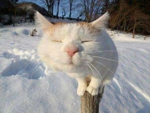 Так вот ты какой, майский кот! Забавная история