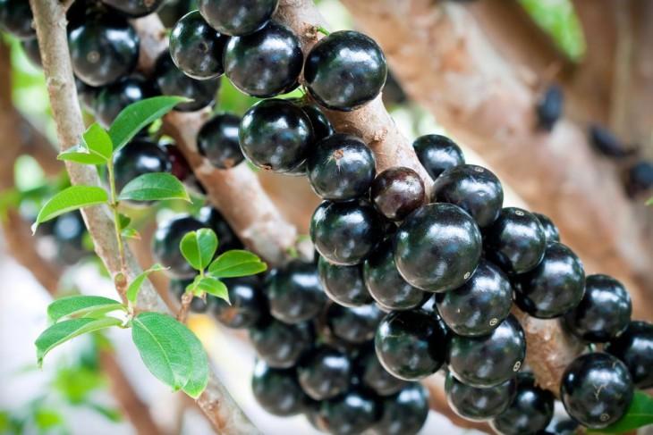 20 экзотических фруктов, о которых вы ничего не знали (20 фото)