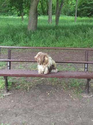 На скамейке лежал чумазый коврик… Никто не знал, что это — щенок, которого ждут и любят