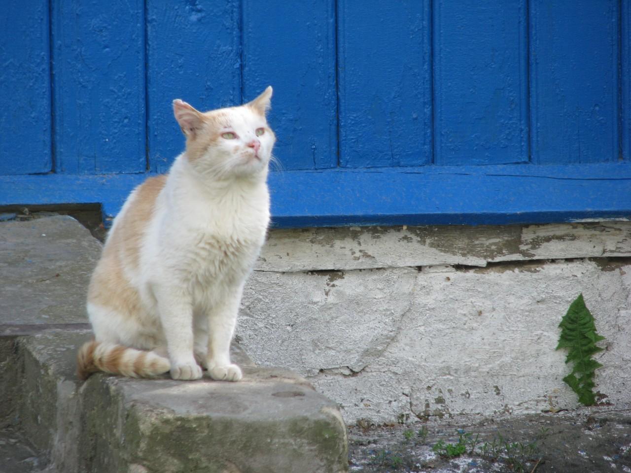 Братья наши меньшие: почему кошка снижает кровяное артериальное давление?