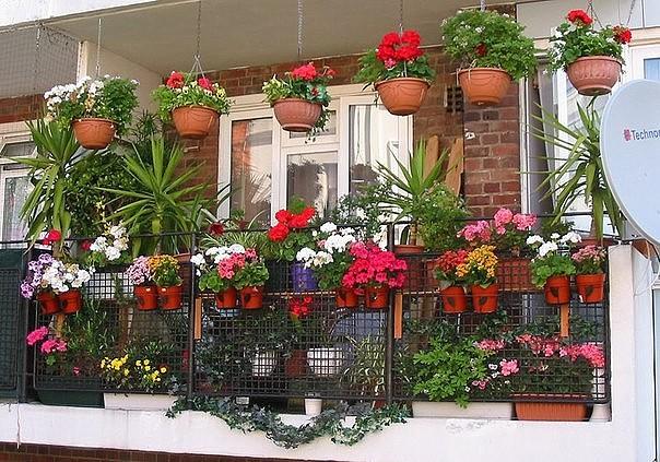 Хотите роскошный цветник в квартире? Тогда запоминайте секреты!
