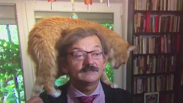 В интервью польского историка вмешался кот