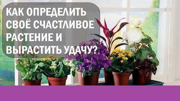 http://mtdata.ru/u22/photo76F9/20116439711-0/original.jpeg