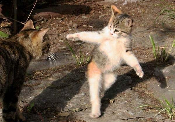 достали котики